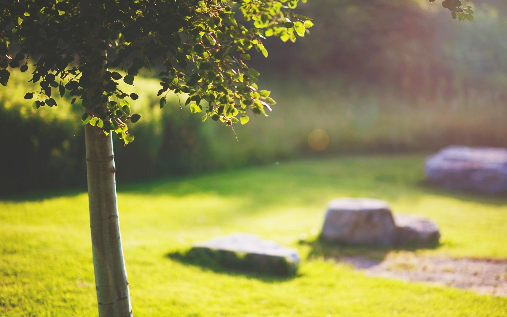 дерево, ствол, крона