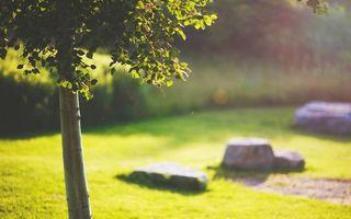 Бесплатные фото дерево,ствол,крона,трава,газон,камни,природа