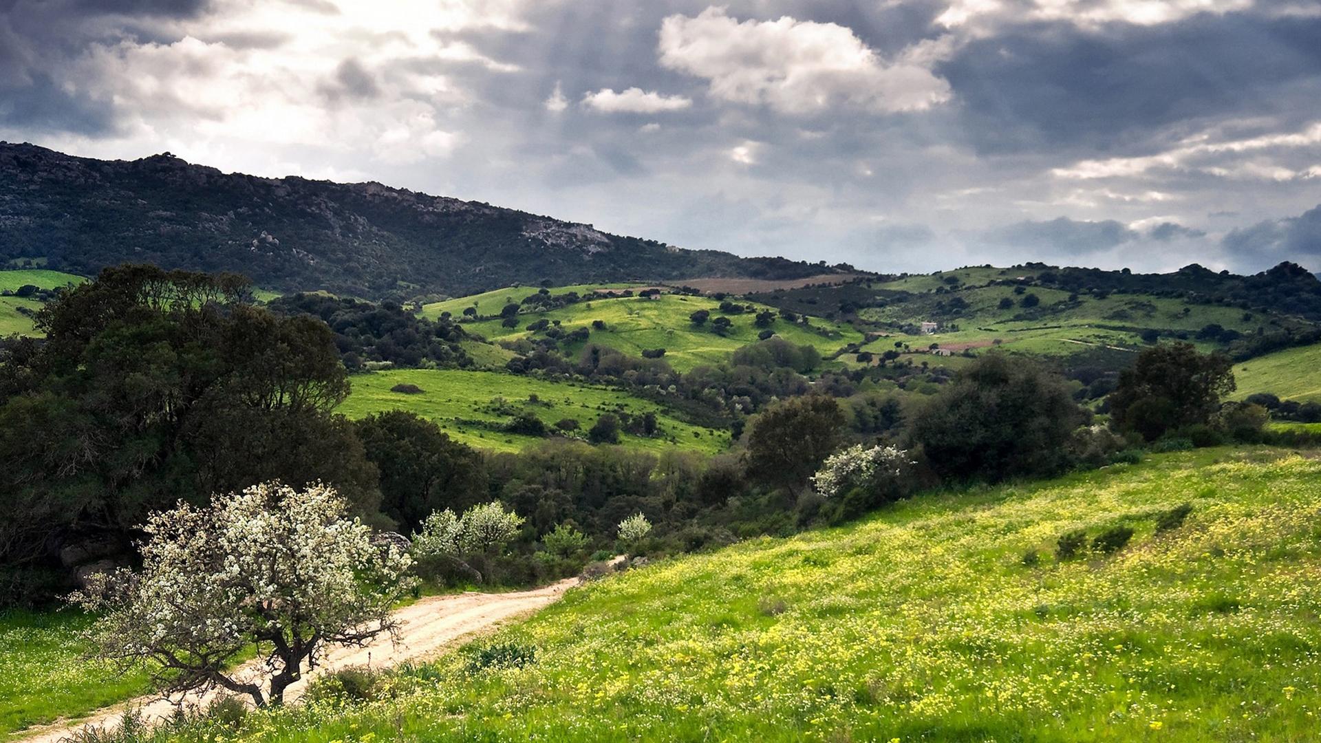 холмы, сопки, трава