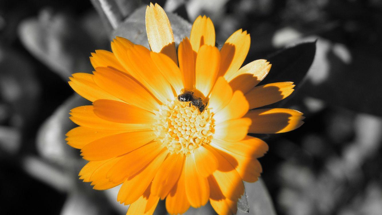 Фото бесплатно желтый, красивы, пчела - на рабочий стол