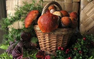 Обои корзина, грибы, боровики, подосиновики, подберезовики, трава, ягоды, стена, дары, леса, природа