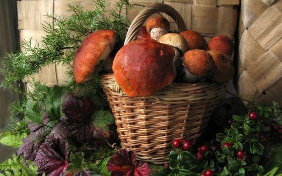 Photo free basket, mushrooms, boletus