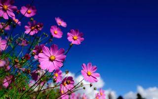 Бесплатные фото лепестки, трава, стебли, лето, солнце, зелень, небо