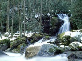 Бесплатные фото лес,деревья,водопад,камни,ил,листья,природа