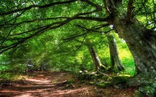Бесплатные фото лес,деревья,крона,листья,зелень,дорога,тропинка