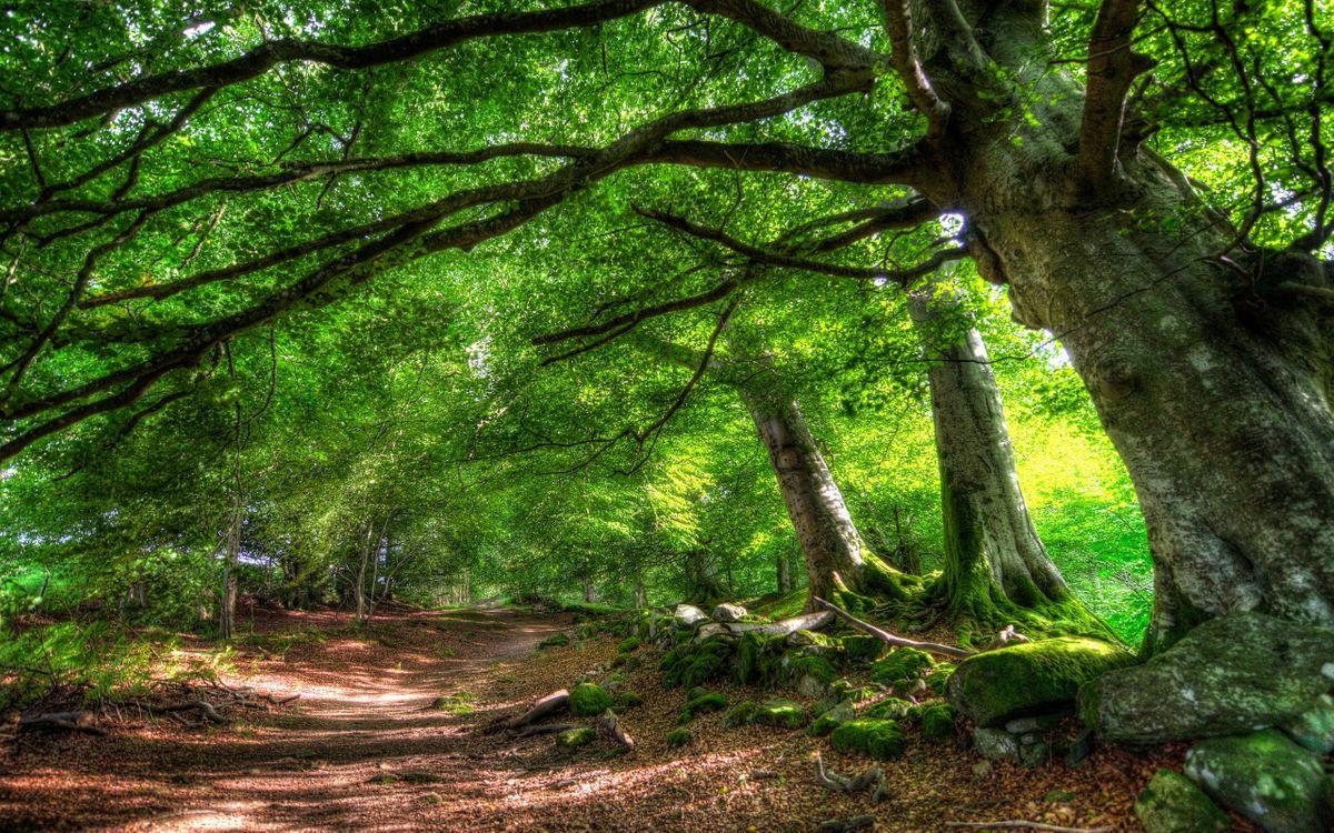 Фото бесплатно лес, деревья, крона, листья, зелень, дорога, тропинка, песок, земля, пейзажи, пейзажи