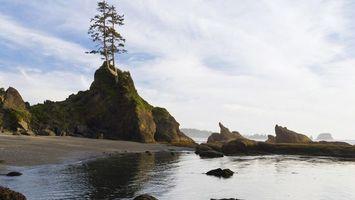 Фото бесплатно природа, дерево, камни