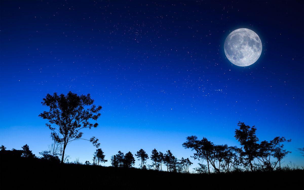 Фото бесплатно ночь, деревья, кустарник, небо, луна, звезды, природа, природа - скачать на рабочий стол
