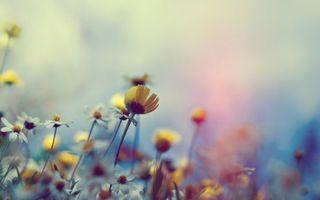 Бесплатные фото одуванчики,ромашки,поле,зелень,растения,лето,цветы