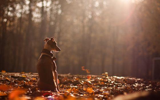 Фото бесплатно пес, ошейник, листва
