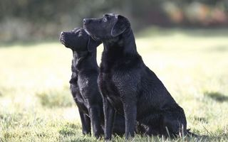 Заставки пес, щенок, трава