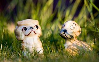 Обои пес, щенок, нос, голова, уши, глаза, язык, зубы, рот, лапы, хвост, игрушка