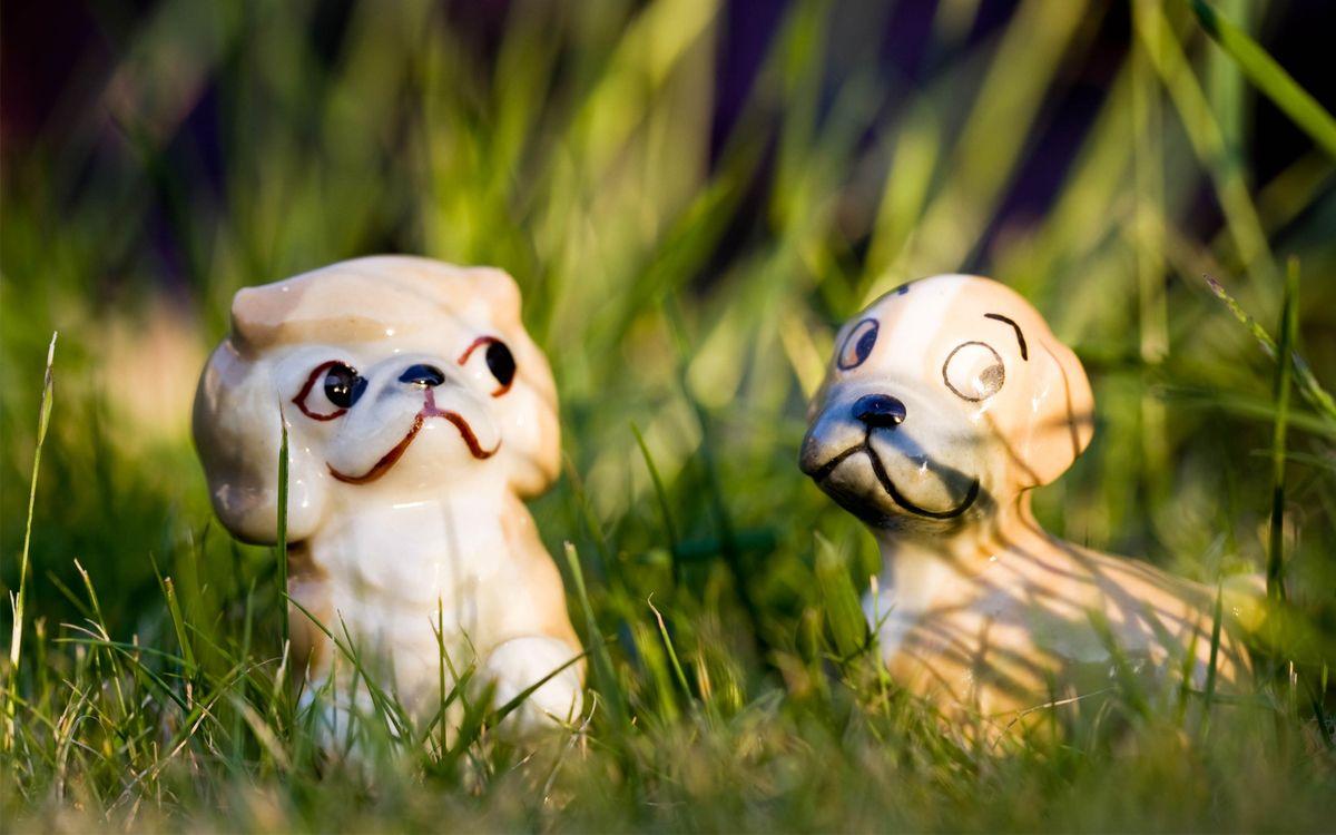Обои пес, щенок, нос картинки на телефон