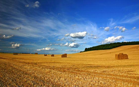 Photo free field, straw, harvest