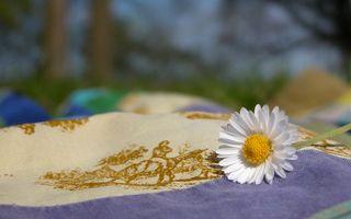 Фото бесплатно белые, отдых, поляна