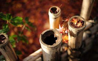 Бесплатные фото забор,бамбук,столбики,куст,ветки,листья,осень
