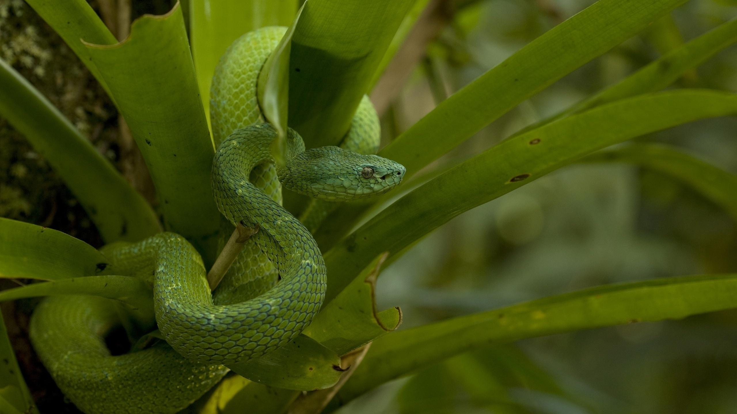 змея, зеленая, глаза