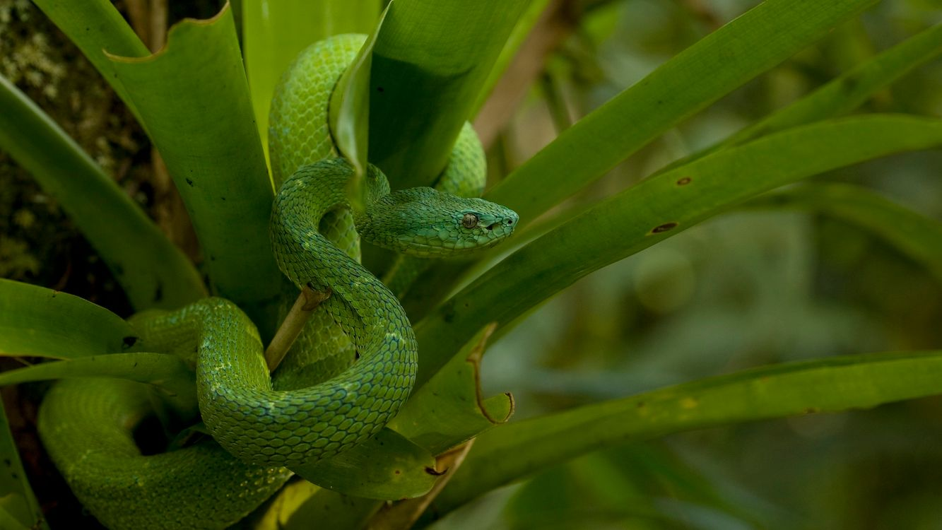 Фото бесплатно змея, зеленая, глаза - на рабочий стол