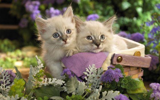 Фото бесплатно котята, котенок, корзинка