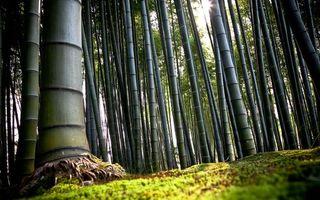 Бесплатные фото бамбуковая,роща,трава,лучи,солнце,листва,природа
