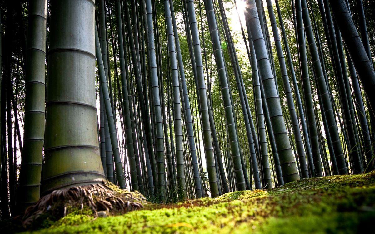 Фото бесплатно бамбуковая, роща, трава, лучи, солнце, листва, природа, природа