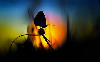Бесплатные фото бобочка,крылья,лапы,усики,трава,закат,солнце