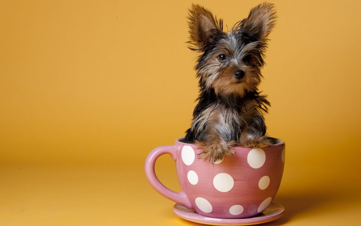 Фото бесплатно чашка, щенок, розовый, белый, желтый, горошек, животные, собаки, собаки