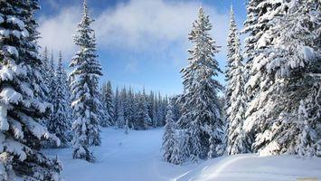 Заставки деревья,ветки,снег,небо,облака,голубое,природа