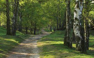 Бесплатные фото деревья,стволы,листья,лес,трава,дорога,пейзажи