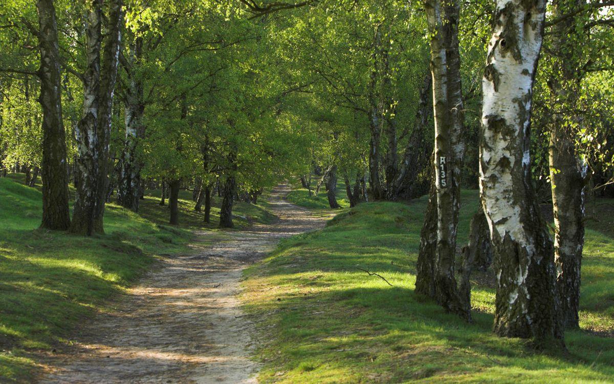 Фото бесплатно листья, лес, пейзажи - на рабочий стол