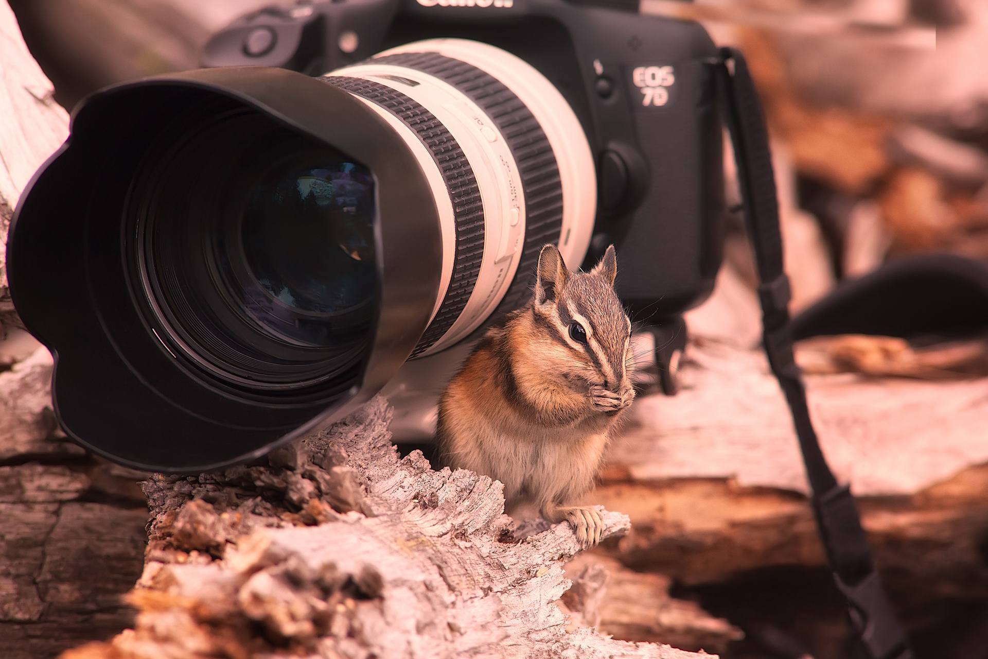 животные техника Tamron фотоаппарат animals technique the camera бесплатно