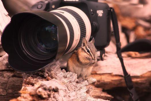 Фото бесплатно фотоаппарат, белка, заставка