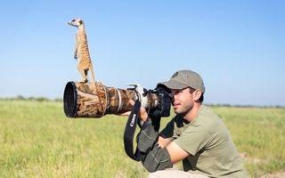 Бесплатные фото фотограф,фотоаппарат,объектик,сурикат,природа,трава,юмор