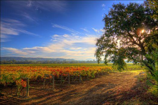 Бесплатные фото healdsburg,калифорния,дорга,дерево,виноградник,пейзаж,природа