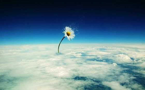 Photo free space, clouds, daisy