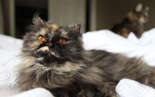 Бесплатные фото кот,пушистый,разноцветный,глаза,морда,уши,кошки