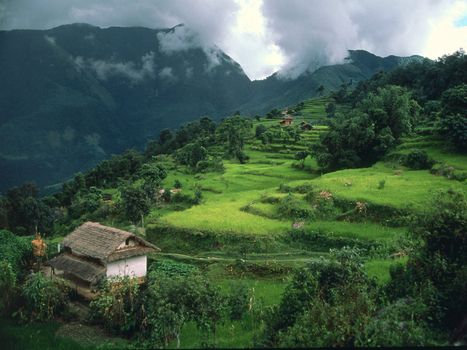 Фото бесплатно лес, деревья, хижина, кусты, листья, зеленые, природа