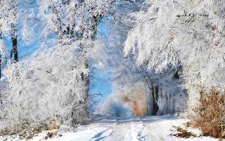 Бесплатные фото лес,снег,зима,дорога,небо,голубое,природа