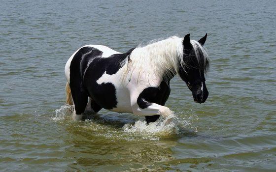 Фото бесплатно лошадь, конь, окрас, пятнышки, грива, копыта, ноги, животные