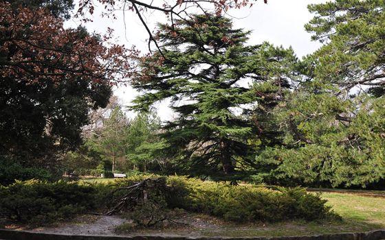 Бесплатные фото парк,деревья,ветви,трава,бордюр