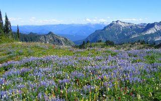 Бесплатные фото поле,луг,цветки,листья,лепестки,горы,скалы