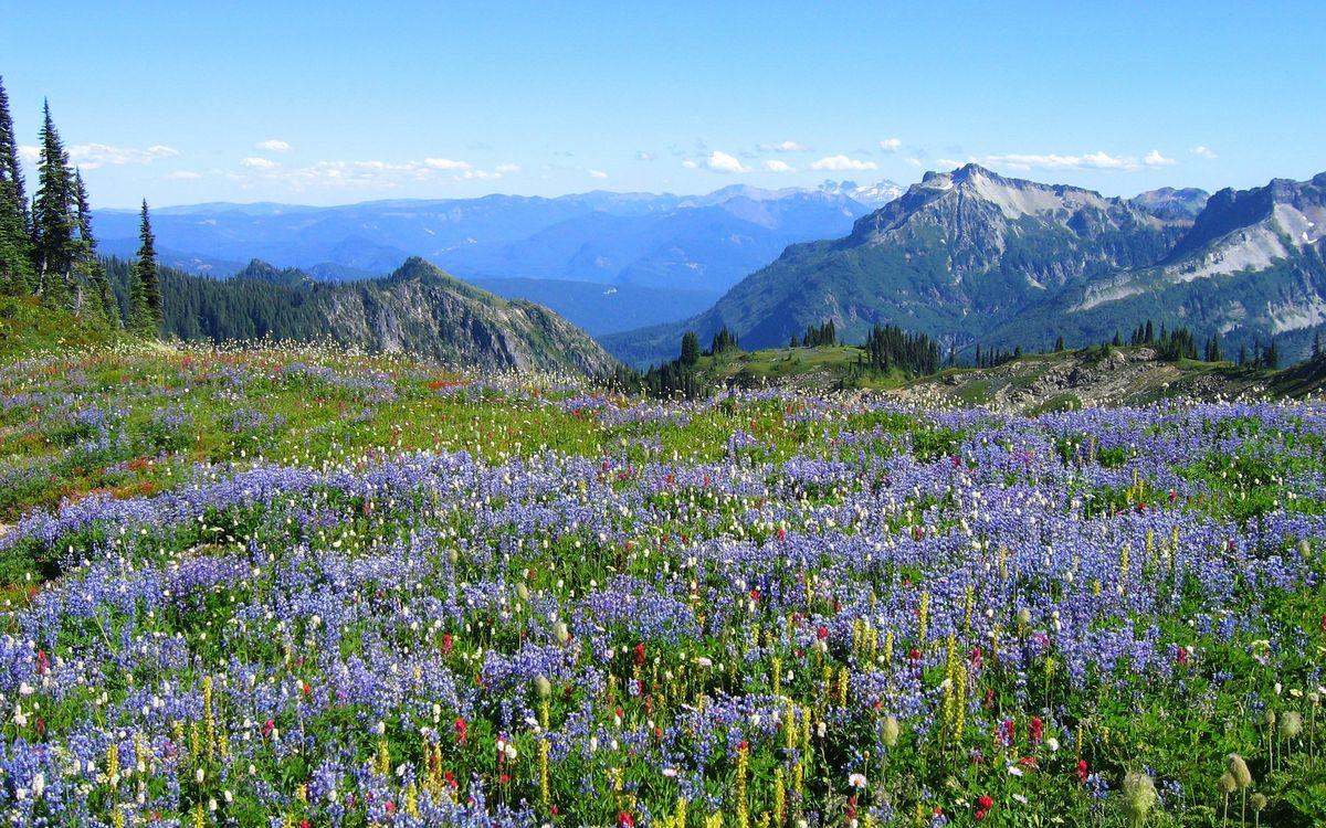 Фото бесплатно цветы, луг, природа - на рабочий стол