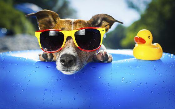 Заставки собака, очки, игрушка