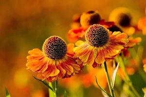 Обои цветки, шарики, лепестки, стебель, листья, клумба, фото, цветы
