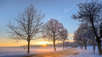 Заставки солнце, иней, деревья