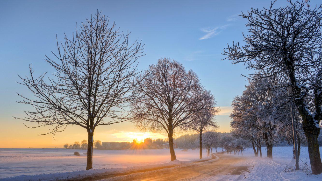 Обои солнце, иней, деревья картинки на телефон