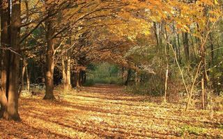 Бесплатные фото аллея,тропинка,деревья,осень,листопад,листья,природа