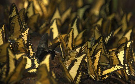 Фото бесплатно бабочки, кралья, раскраска
