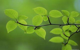 Бесплатные фото дерево,ветви,листья,зеленые,фон мутный
