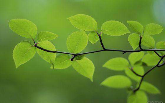 Photo free background murky, branches, green
